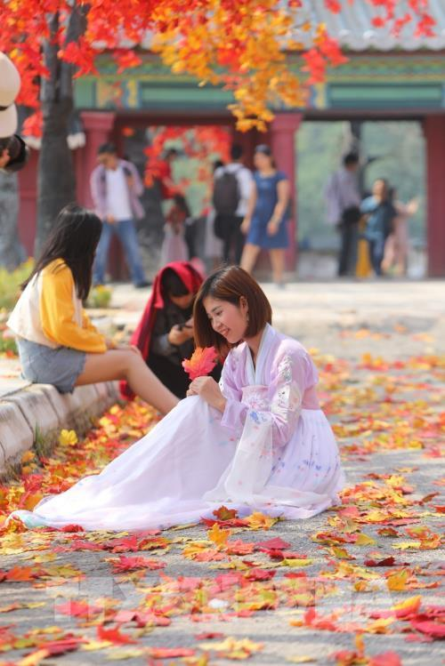 Giới trẻ Hà Nội háo hức với con đường phong lá đỏ như ở Hàn Quốc Ảnh 4