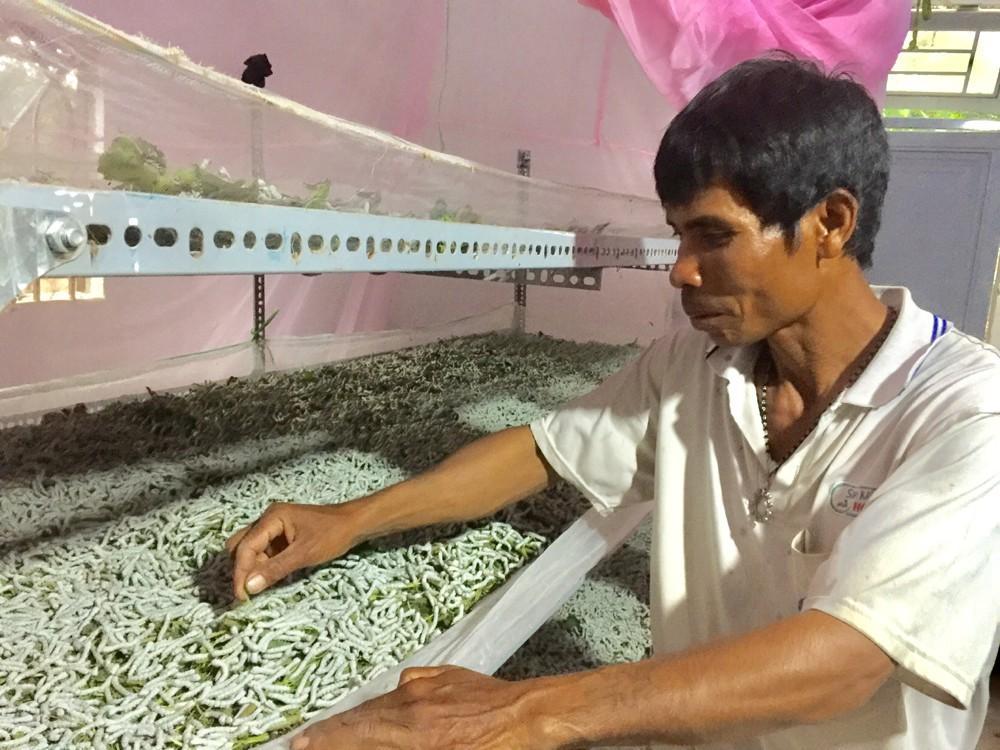 Đinh Văn đổi thay từ nghề trồng dâu, nuôi tằm Ảnh 2