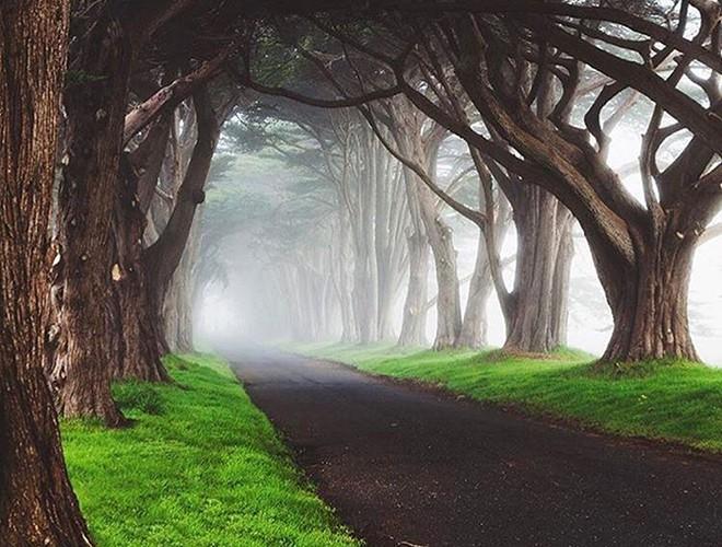 Chiêm ngưỡng những đường hầm đặc biệt nhất thế giới khiến nhiều người ngỡ ngàng Ảnh 1