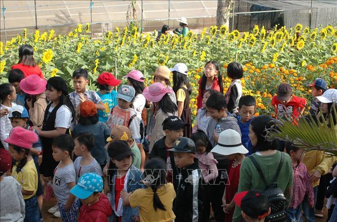 Hàng trăm nghìn người đến 'check in' vườn hoa hướng dương ở phố núi Pleiku Ảnh 5