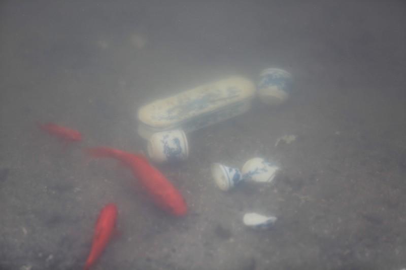 Cá chép phơi trắng bụng trên hồ Hoàng Cầu Ảnh 8