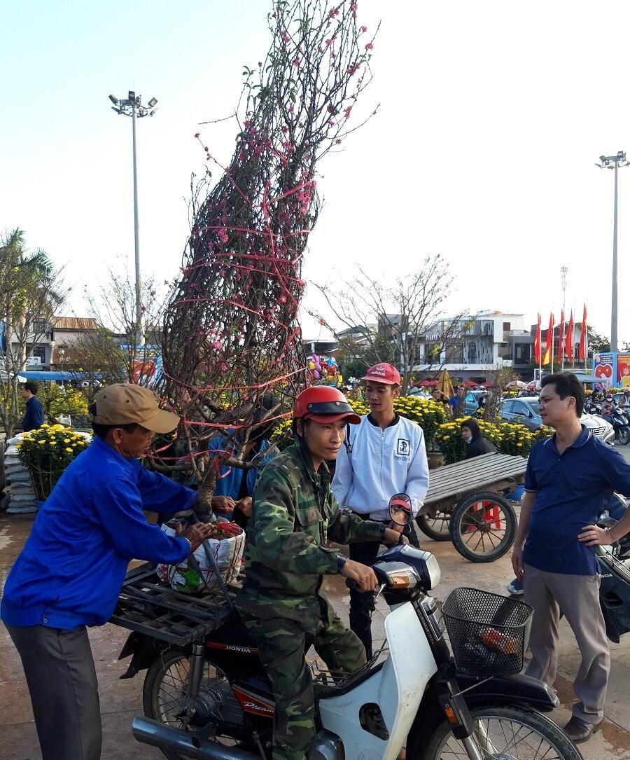 'Đại lão mai' giá 250 triệu ở chợ hoa Quảng Trị khiến nhiều người ngẩn ngơ Ảnh 16