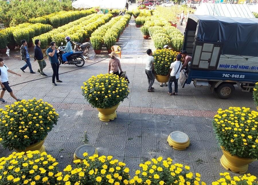 'Đại lão mai' giá 250 triệu ở chợ hoa Quảng Trị khiến nhiều người ngẩn ngơ Ảnh 14