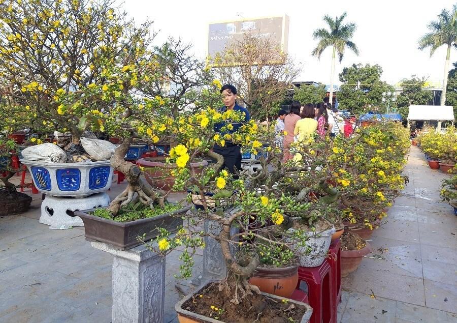 'Đại lão mai' giá 250 triệu ở chợ hoa Quảng Trị khiến nhiều người ngẩn ngơ Ảnh 12