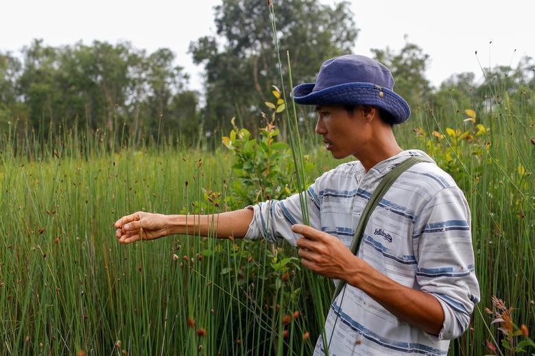 Ống hút làm từ cỏ của chàng trai Việt được báo Anh khen ngợi Ảnh 3