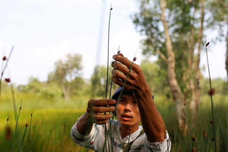 Ống hút làm từ cỏ của chàng trai Việt được báo Anh khen ngợi Ảnh 4