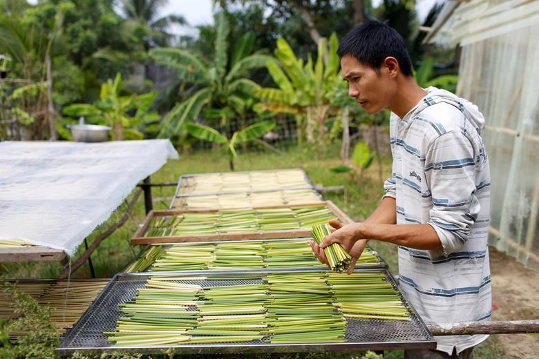 Ống hút làm từ cỏ của chàng trai Việt được báo Anh khen ngợi Ảnh 9