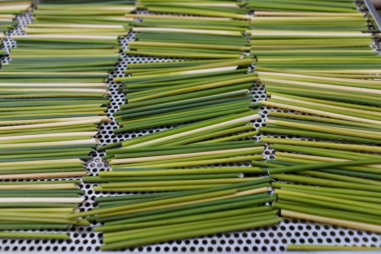 Ống hút làm từ cỏ của chàng trai Việt được báo Anh khen ngợi Ảnh 10