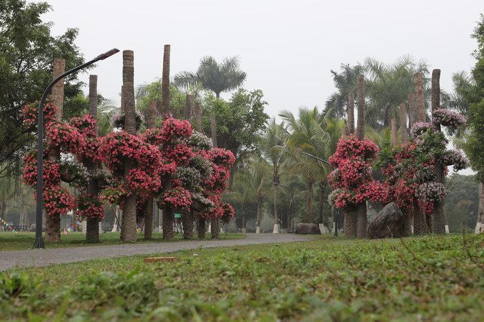 Ngỡ ngàng vẻ đẹp của thung lũng đầy sắc hoa xuân tại khu đô thị ở Hà Nội Ảnh 3