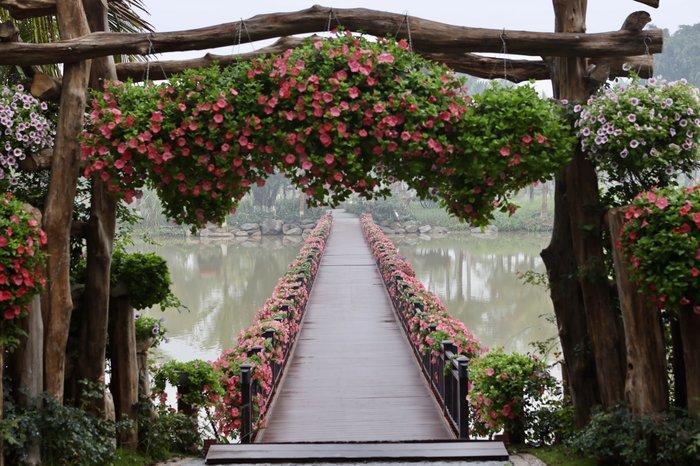 Ngỡ ngàng vẻ đẹp của thung lũng đầy sắc hoa xuân tại khu đô thị ở Hà Nội Ảnh 12