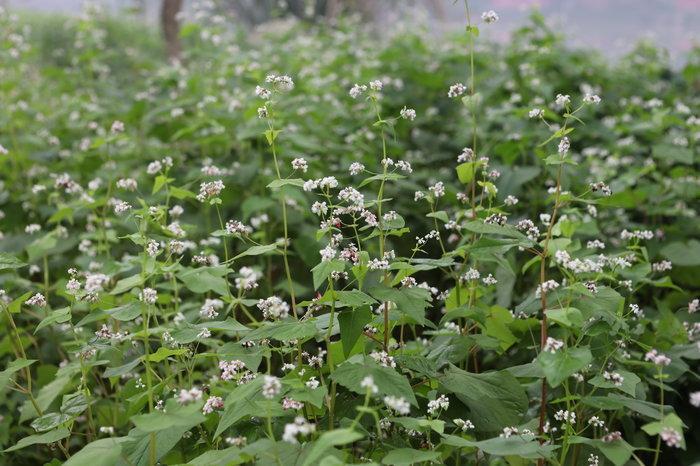 Ngỡ ngàng vẻ đẹp của thung lũng đầy sắc hoa xuân tại khu đô thị ở Hà Nội Ảnh 15