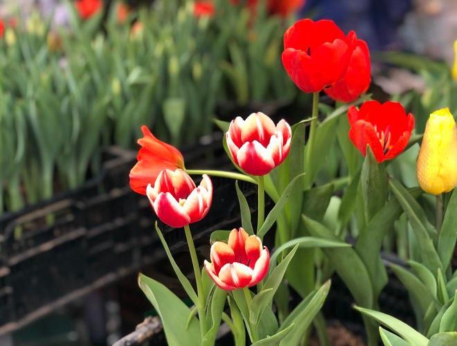 Nhộn nhịp chợ hoa Quảng An ngày cuối năm trong mưa lạnh Ảnh 14