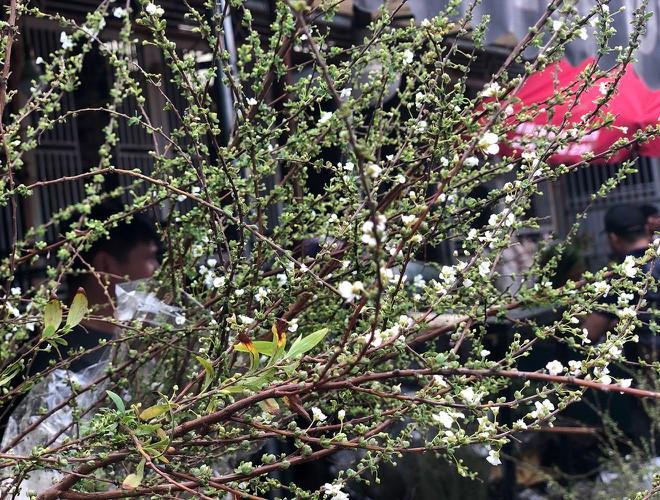 Nhộn nhịp chợ hoa Quảng An ngày cuối năm trong mưa lạnh Ảnh 13