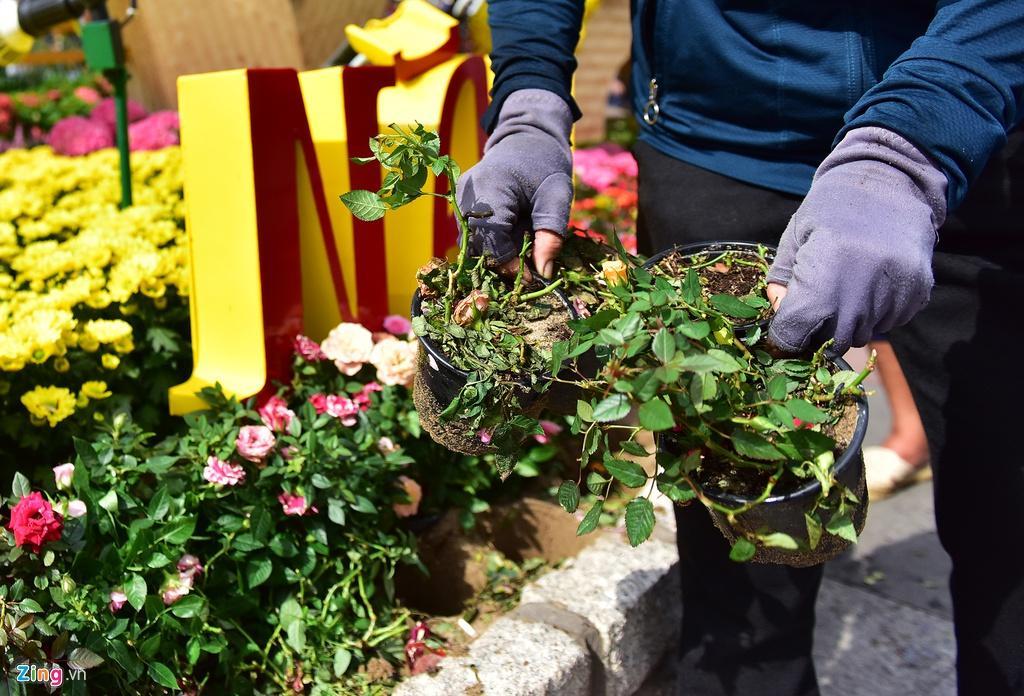 Chưa hết Tết, hàng trăm chậu hoa bị đạp nát ở đường hoa Nguyễn Huệ Ảnh 6