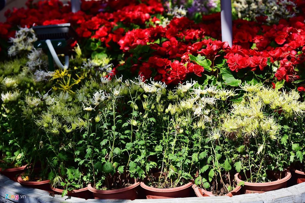 Chưa hết Tết, hàng trăm chậu hoa bị đạp nát ở đường hoa Nguyễn Huệ Ảnh 17