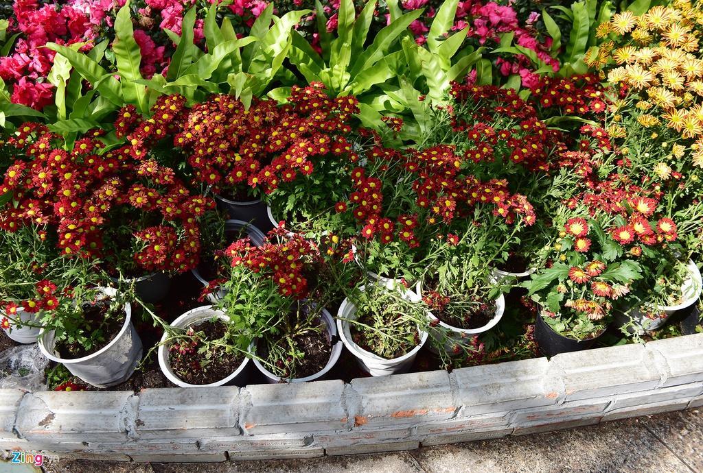 Chưa hết Tết, hàng trăm chậu hoa bị đạp nát ở đường hoa Nguyễn Huệ Ảnh 5