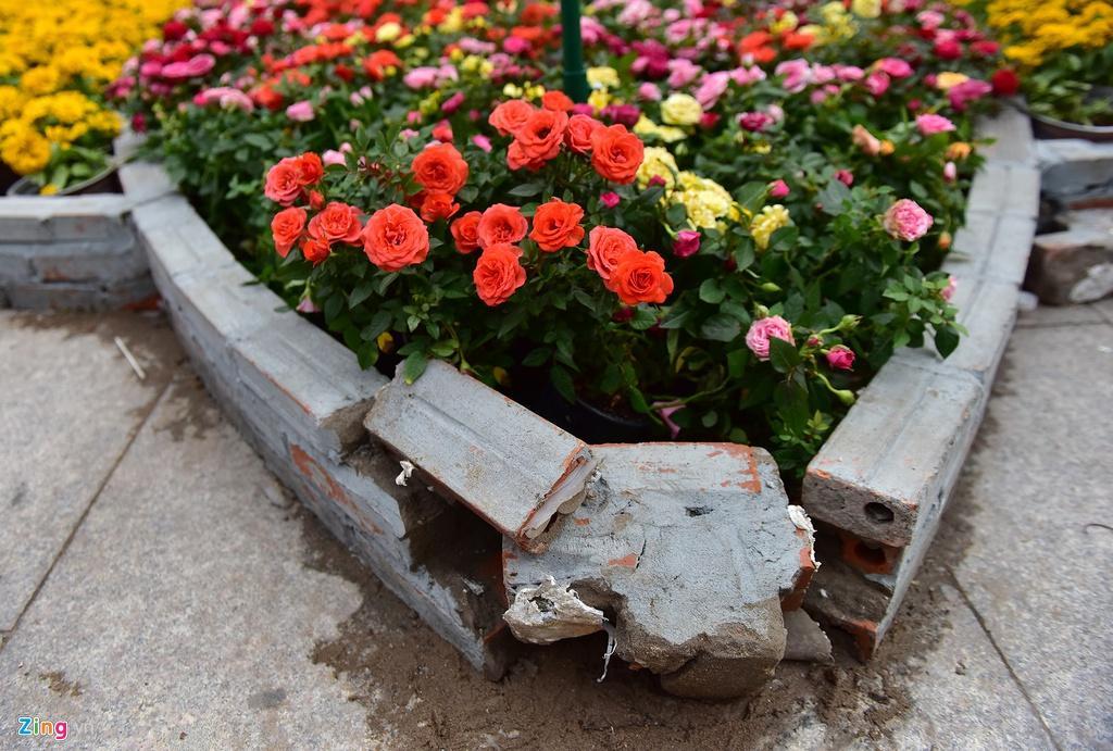 Chưa hết Tết, hàng trăm chậu hoa bị đạp nát ở đường hoa Nguyễn Huệ Ảnh 7