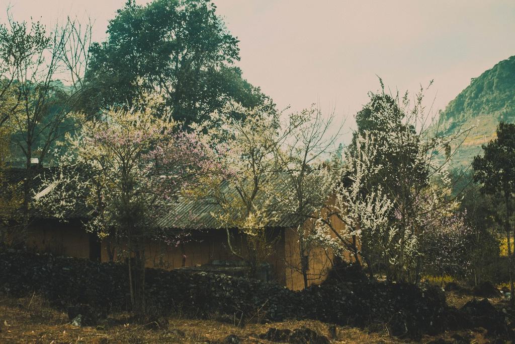 Hoa xuân khoe sắc trên cao nguyên đá Hà Giang Ảnh 6