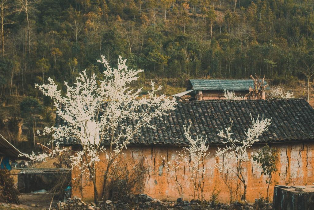 Hoa xuân khoe sắc trên cao nguyên đá Hà Giang Ảnh 4