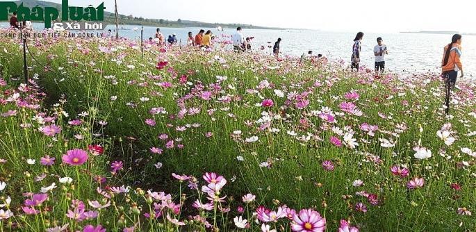 Vườn hoa Long Loi đẹp lung linh bên lòng hồ thủy điện Plêi Krông Ảnh 2