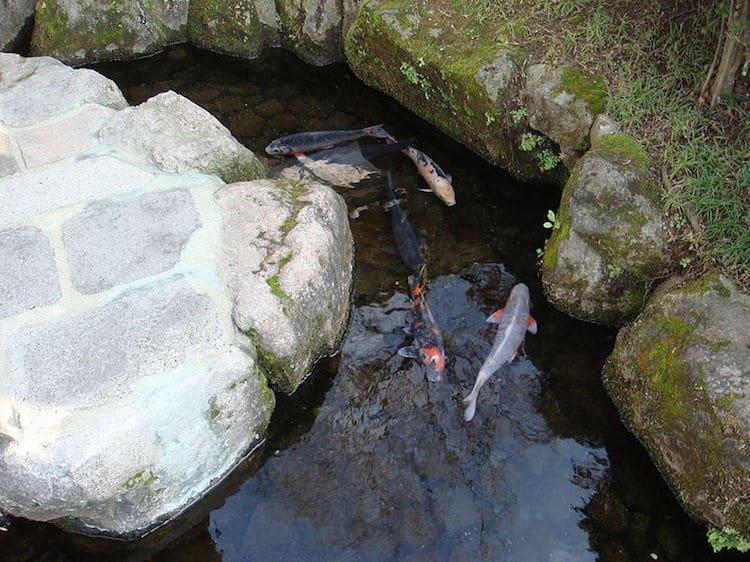Nhật Bản: Du khách nước ngoài bất ngờ về rãnh thoát nước, cá có thể sinh sống Ảnh 5