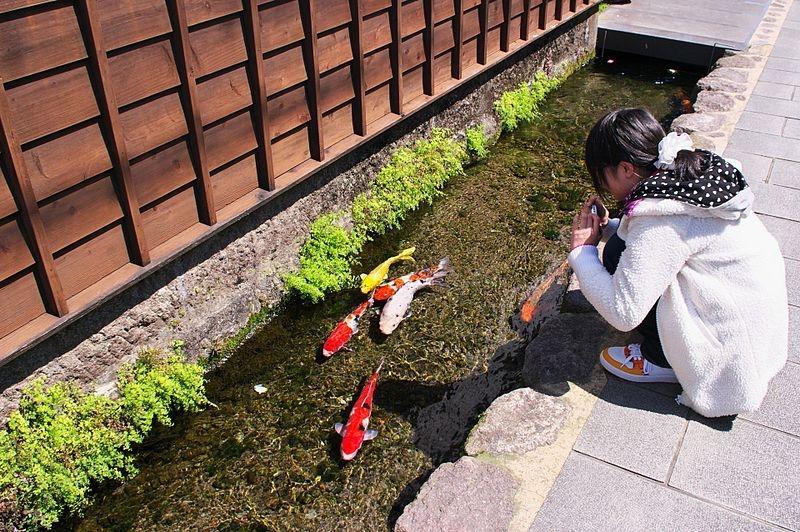 Nhật Bản: Du khách nước ngoài bất ngờ về rãnh thoát nước, cá có thể sinh sống Ảnh 4