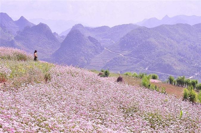 Ngỡ ngàng trước cánh đồng 'hoa mặt trời' lớn nhất Việt Nam Ảnh 6