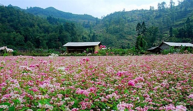 Ngỡ ngàng trước cánh đồng 'hoa mặt trời' lớn nhất Việt Nam Ảnh 7