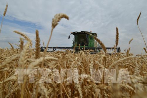 Giá lương thực thế giới tăng trong tháng đầu năm Ảnh 1