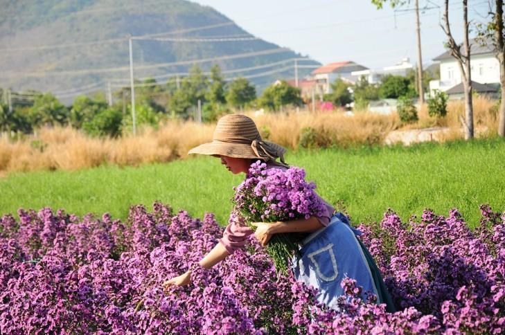 Vườn thạch thảo tím ở Bà Rịa ngỡ như cánh đồng hoa lavender ở Pháp Ảnh 8