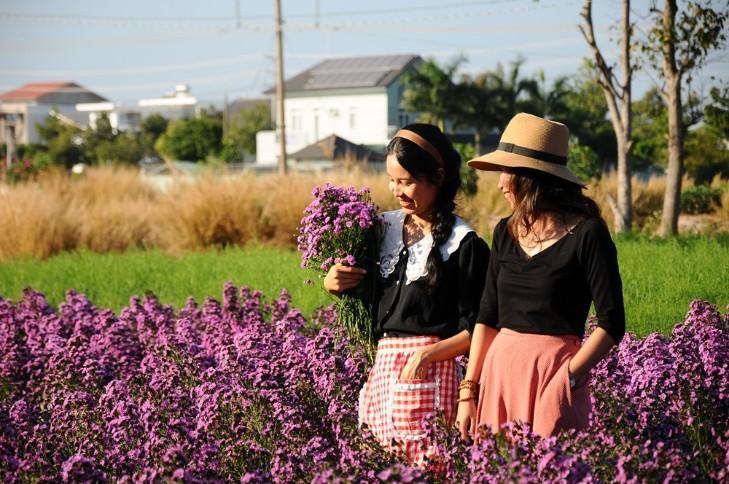 Vườn thạch thảo tím ở Bà Rịa ngỡ như cánh đồng hoa lavender ở Pháp Ảnh 12