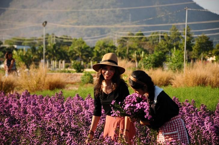 Vườn thạch thảo tím ở Bà Rịa ngỡ như cánh đồng hoa lavender ở Pháp Ảnh 11