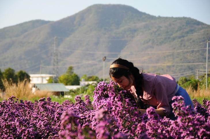 Vườn thạch thảo tím ở Bà Rịa ngỡ như cánh đồng hoa lavender ở Pháp Ảnh 3