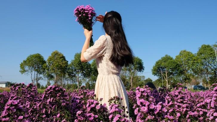 Vườn thạch thảo tím ở Bà Rịa ngỡ như cánh đồng hoa lavender ở Pháp Ảnh 5