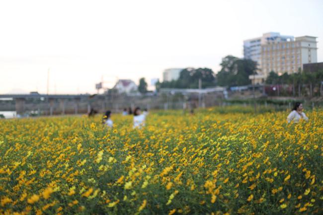 Rực rỡ sắc hoa bên 'dòng sông chảy ngược' Ảnh 1
