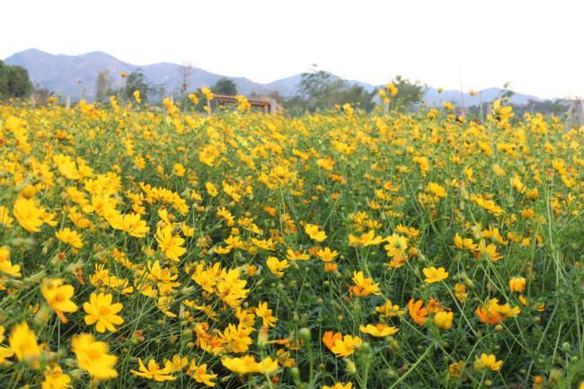 Rực rỡ sắc hoa bên 'dòng sông chảy ngược' Ảnh 5