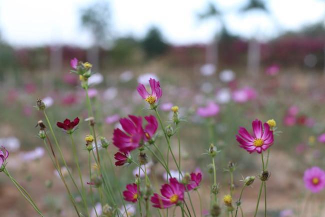 Rực rỡ sắc hoa bên 'dòng sông chảy ngược' Ảnh 8