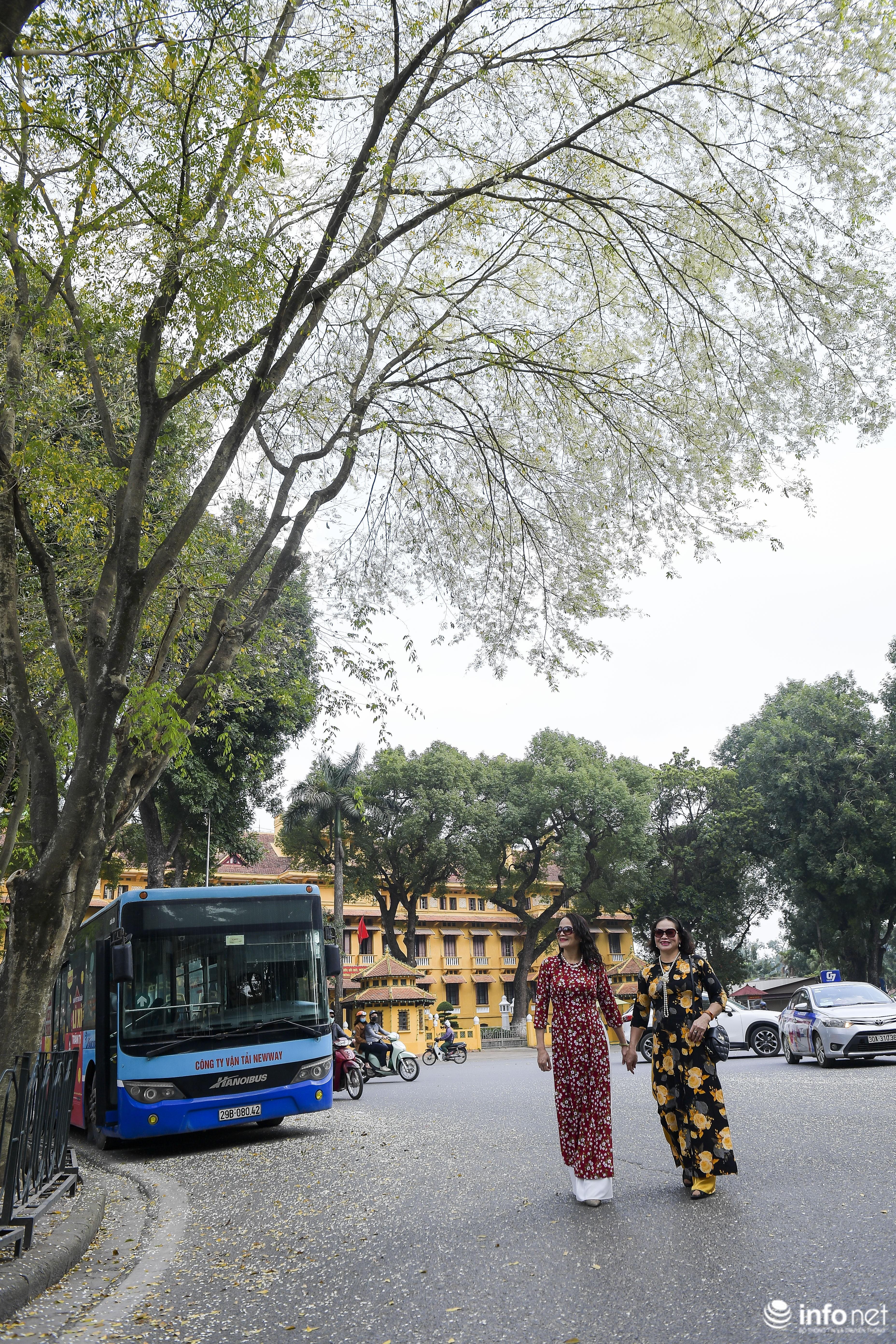 Ngắm hoa sưa nở trắng phố phường Hà Nội Ảnh 10