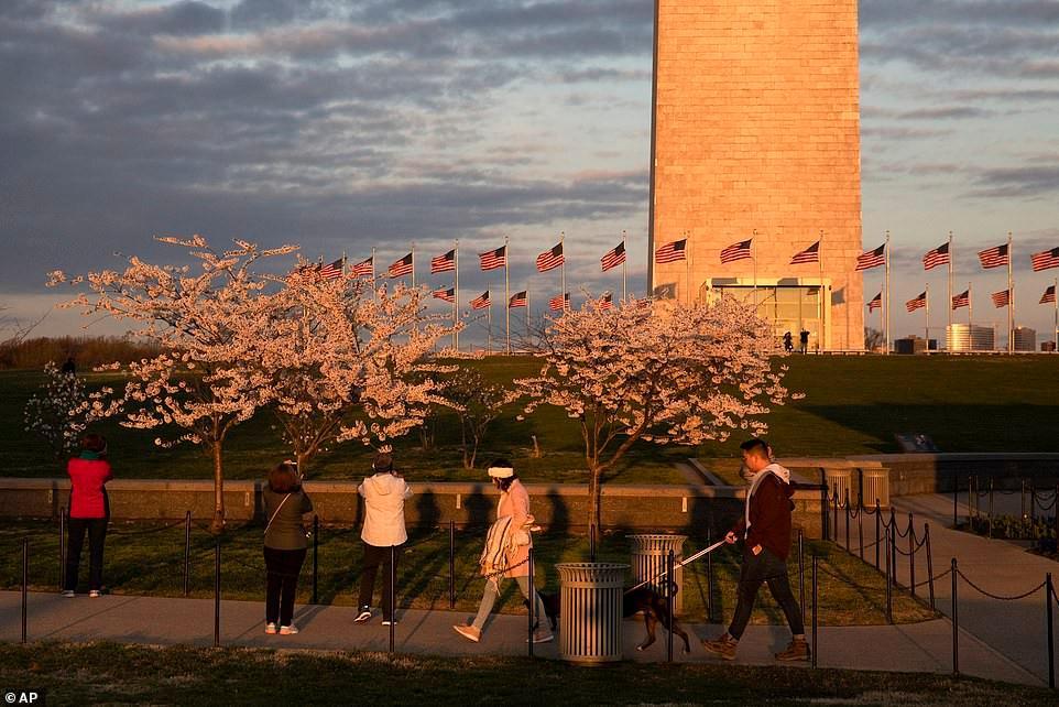 Hàng trăm người đổ xô đi ngắm hoa anh đào ở Mỹ giữa đại dịch Covid-19 Ảnh 7