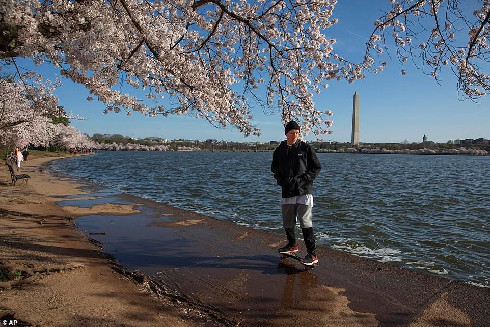 Hàng trăm người đổ xô đi ngắm hoa anh đào ở Mỹ giữa đại dịch Covid-19 Ảnh 6