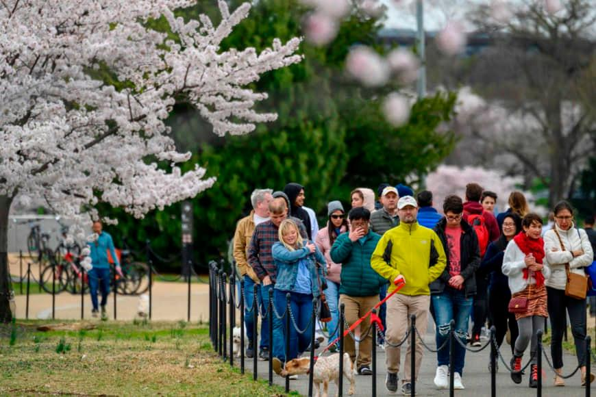 Hàng trăm người đổ xô đi ngắm hoa anh đào ở Mỹ giữa đại dịch Covid-19 Ảnh 1