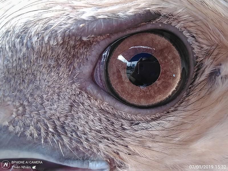 Mãn nhãn với top ảnh macro 'bá đạo' từ camera Bphone Ảnh 8