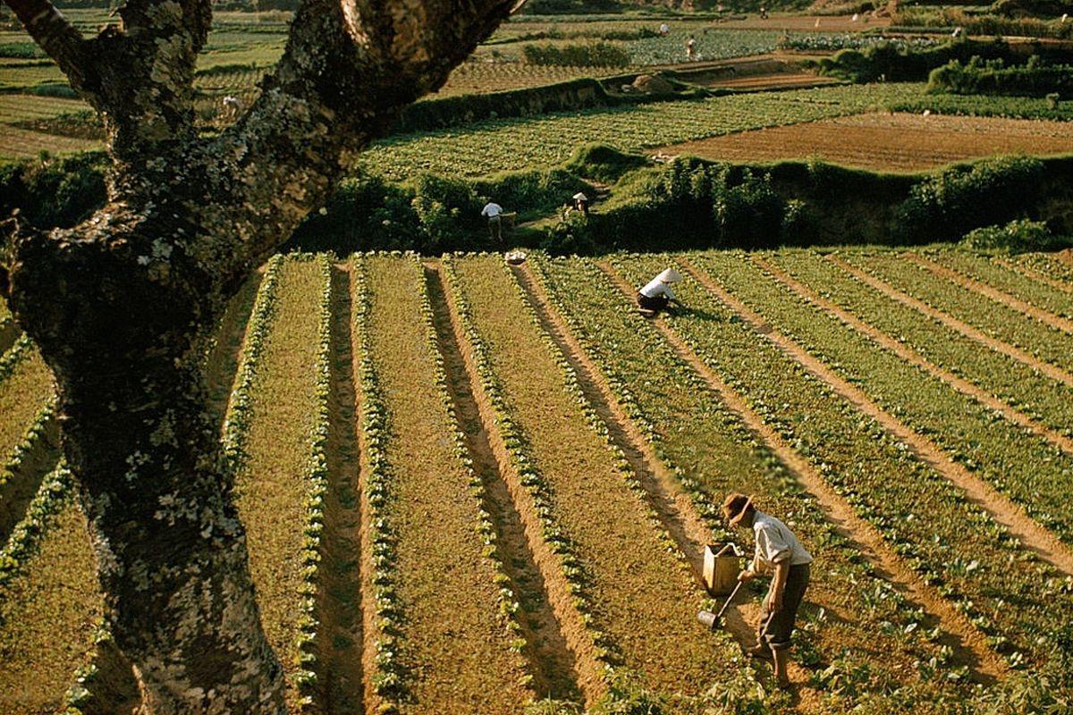 Ảnh màu đẹp về Đà Lạt, Nha Trang, vùng đồng bằng sông Cửu Long những năm 1960 Ảnh 4