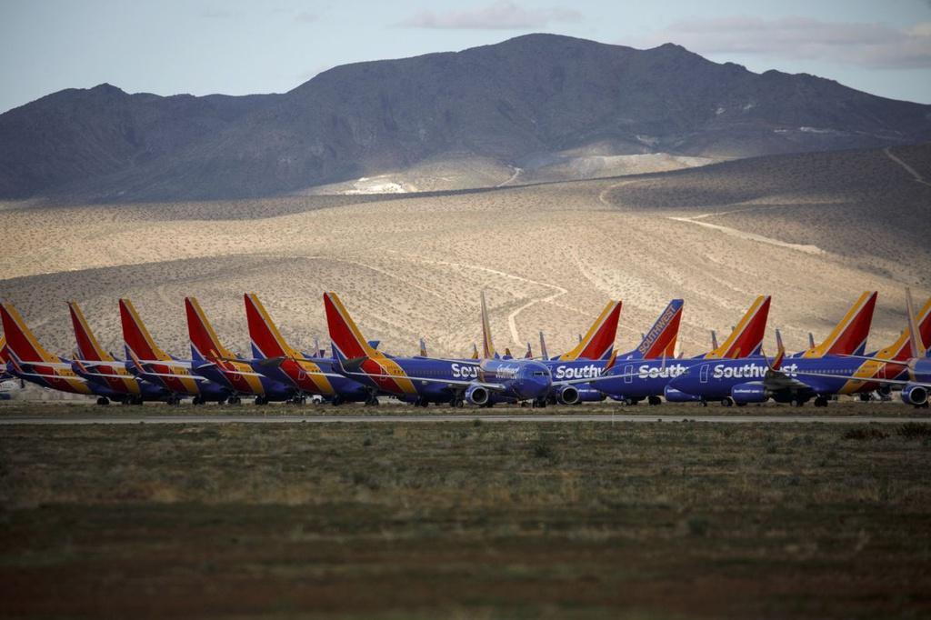 Các hãng hàng không đau đầu ngăn chim làm tổ trên máy bay Ảnh 1