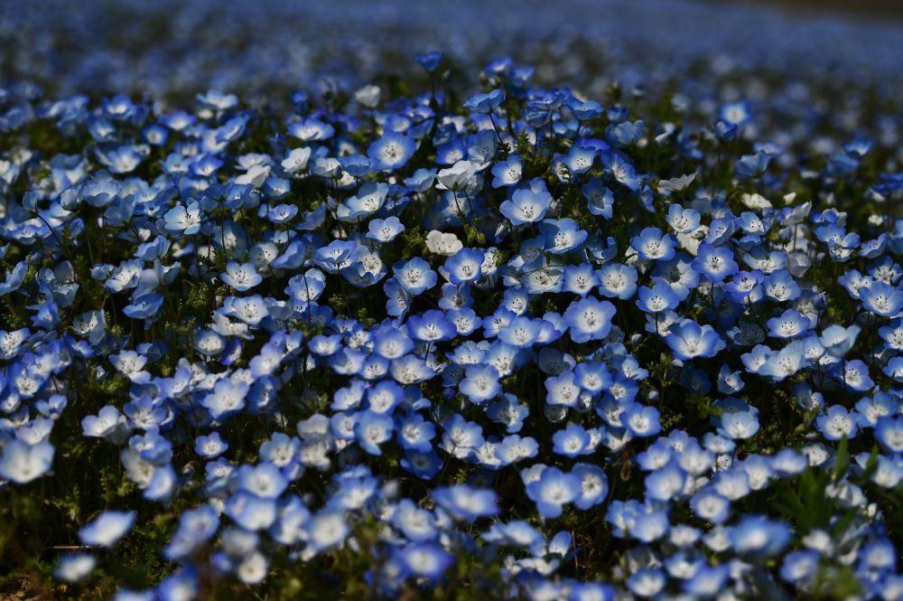 Một thế giới rực rỡ sắc hoa bất chấp đại dịch Covid-19 Ảnh 8