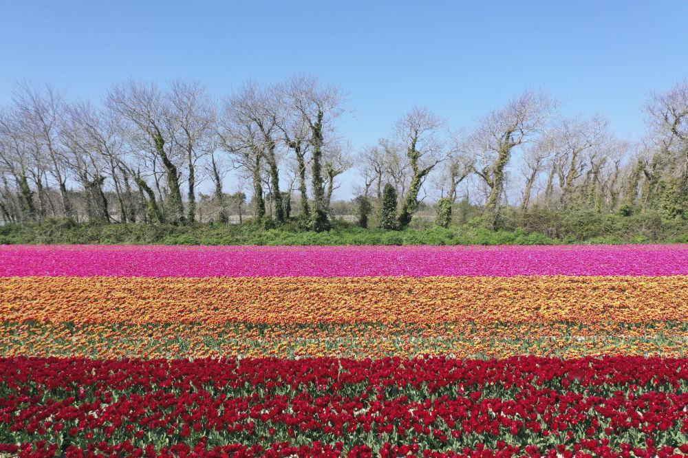 Một thế giới rực rỡ sắc hoa bất chấp đại dịch Covid-19 Ảnh 16