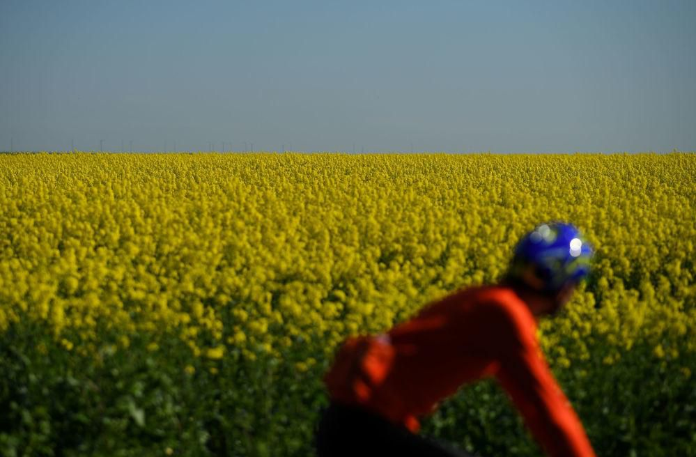 Một thế giới rực rỡ sắc hoa bất chấp đại dịch Covid-19 Ảnh 13