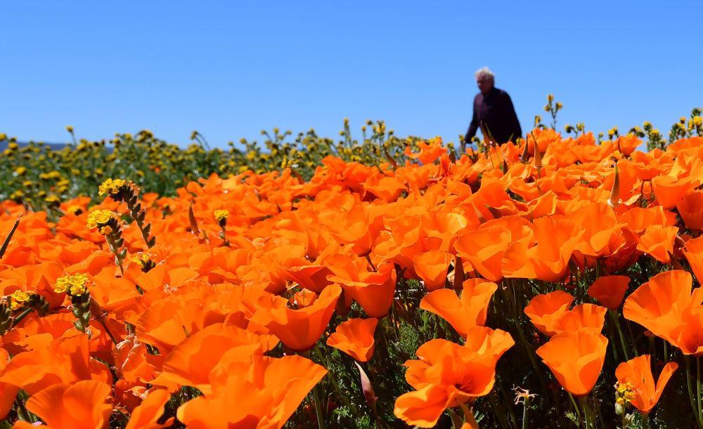 Một thế giới rực rỡ sắc hoa bất chấp đại dịch Covid-19 Ảnh 14