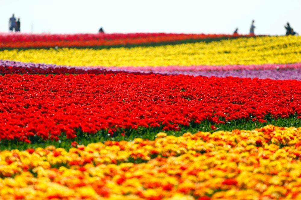 Một thế giới rực rỡ sắc hoa bất chấp đại dịch Covid-19 Ảnh 5