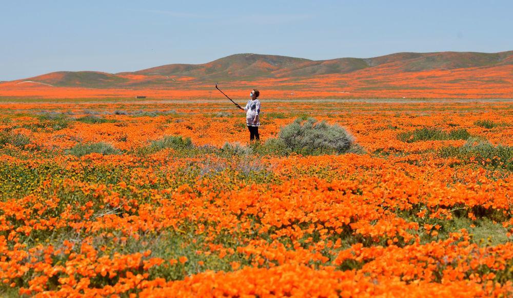 Một thế giới rực rỡ sắc hoa bất chấp đại dịch Covid-19 Ảnh 15